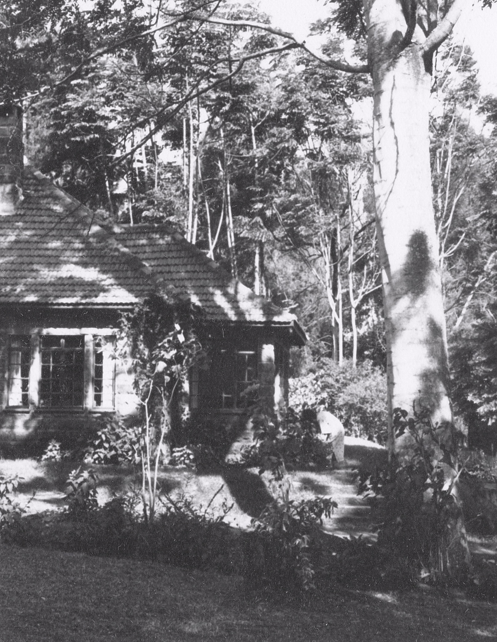A view of the plantation house on Rosslyn Lone Tree Estate